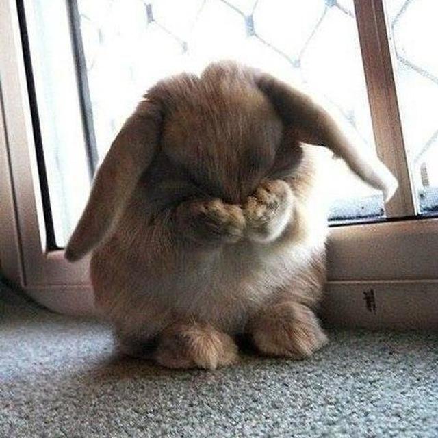 картинки грустного зайца это попытается сделать
