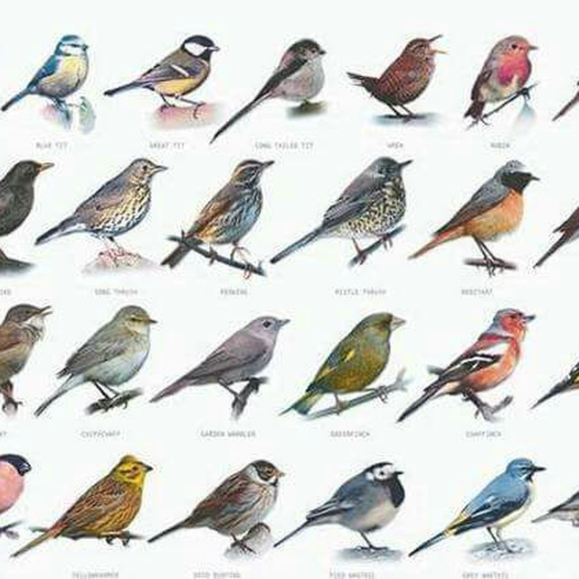 Все птицы россии фото и названия и описание