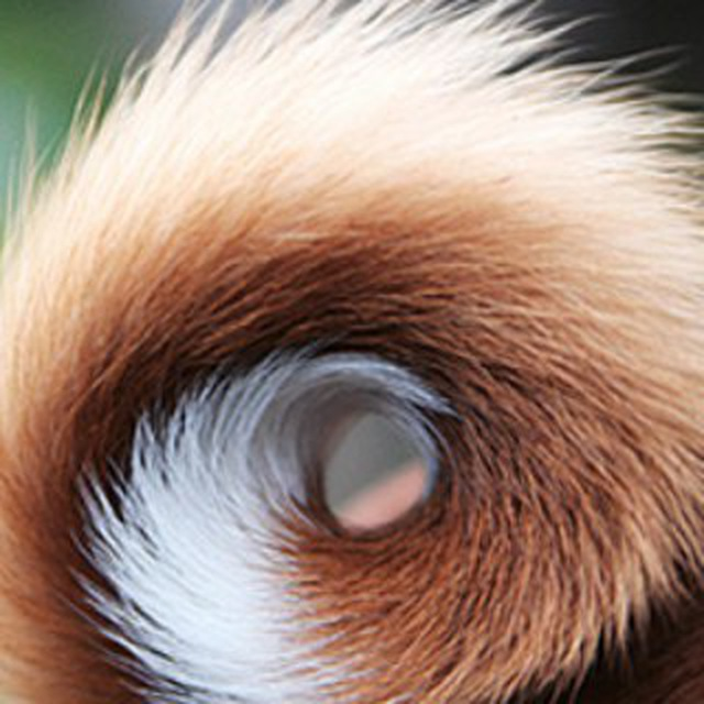 Хвостики у собак картинки