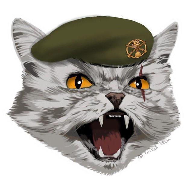 Шалений Кіт