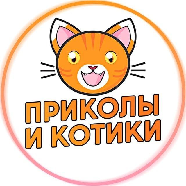 Прикольные картинки аватарки вконтакте