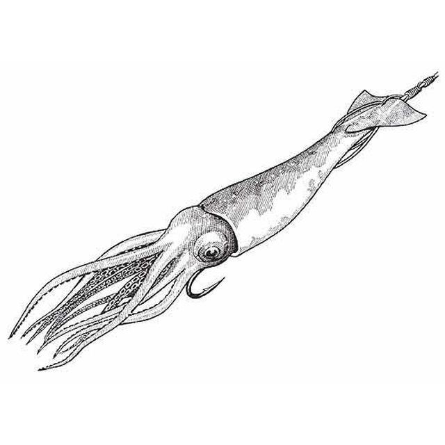 тоже картинка кальмара для вырезания знакомых знаю