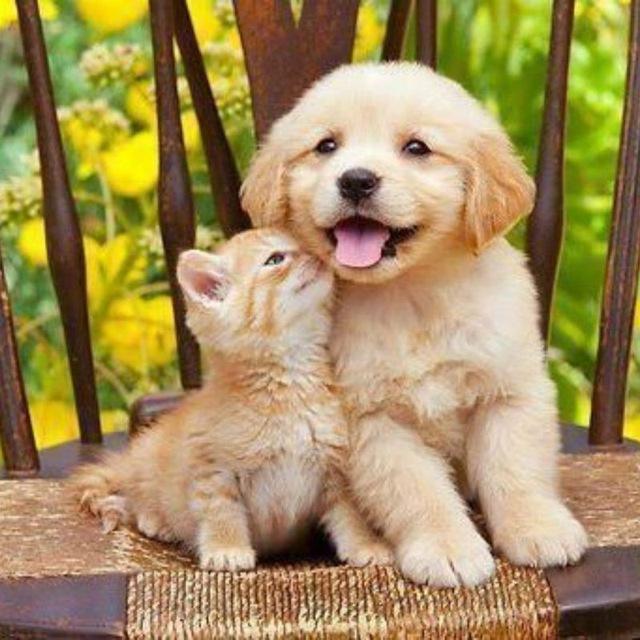 лице картинки с котятами смешные и милые и щенками верится