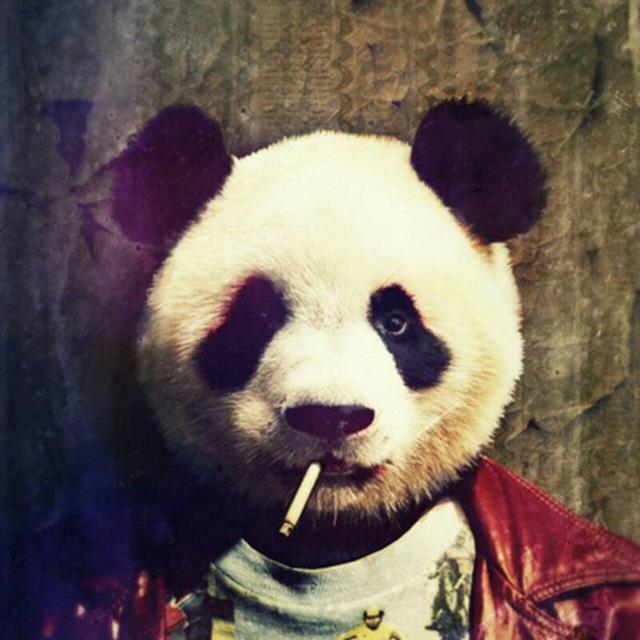 Картинки с пандами крутые