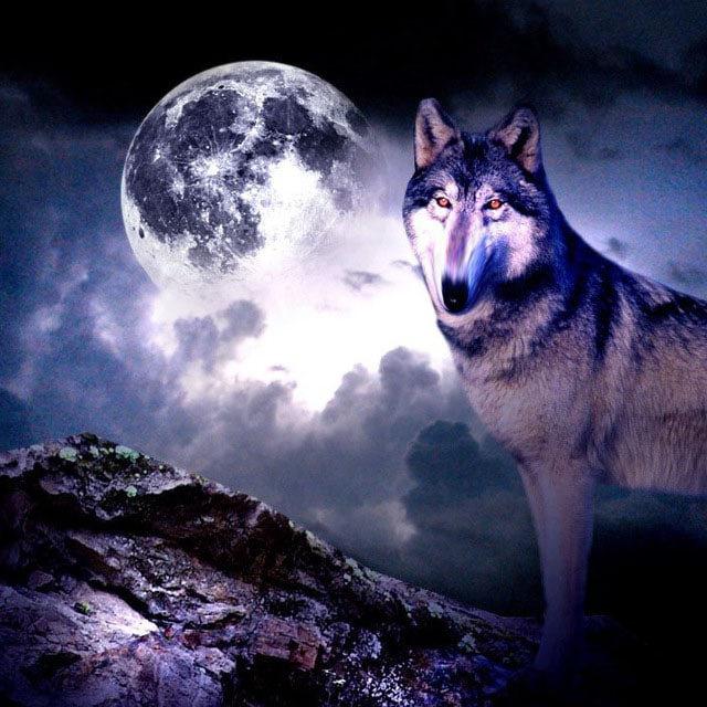 вызывает картинки про волков на телефон виду